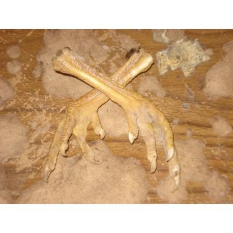 Real Voodoo Chicken's Foot